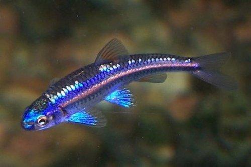 Kom maar op vijververhalen for Bassin poisson exterieur